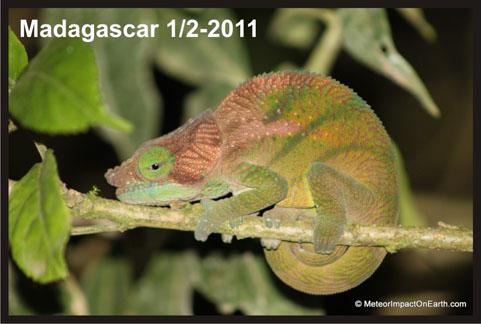 Madagascar1-2011